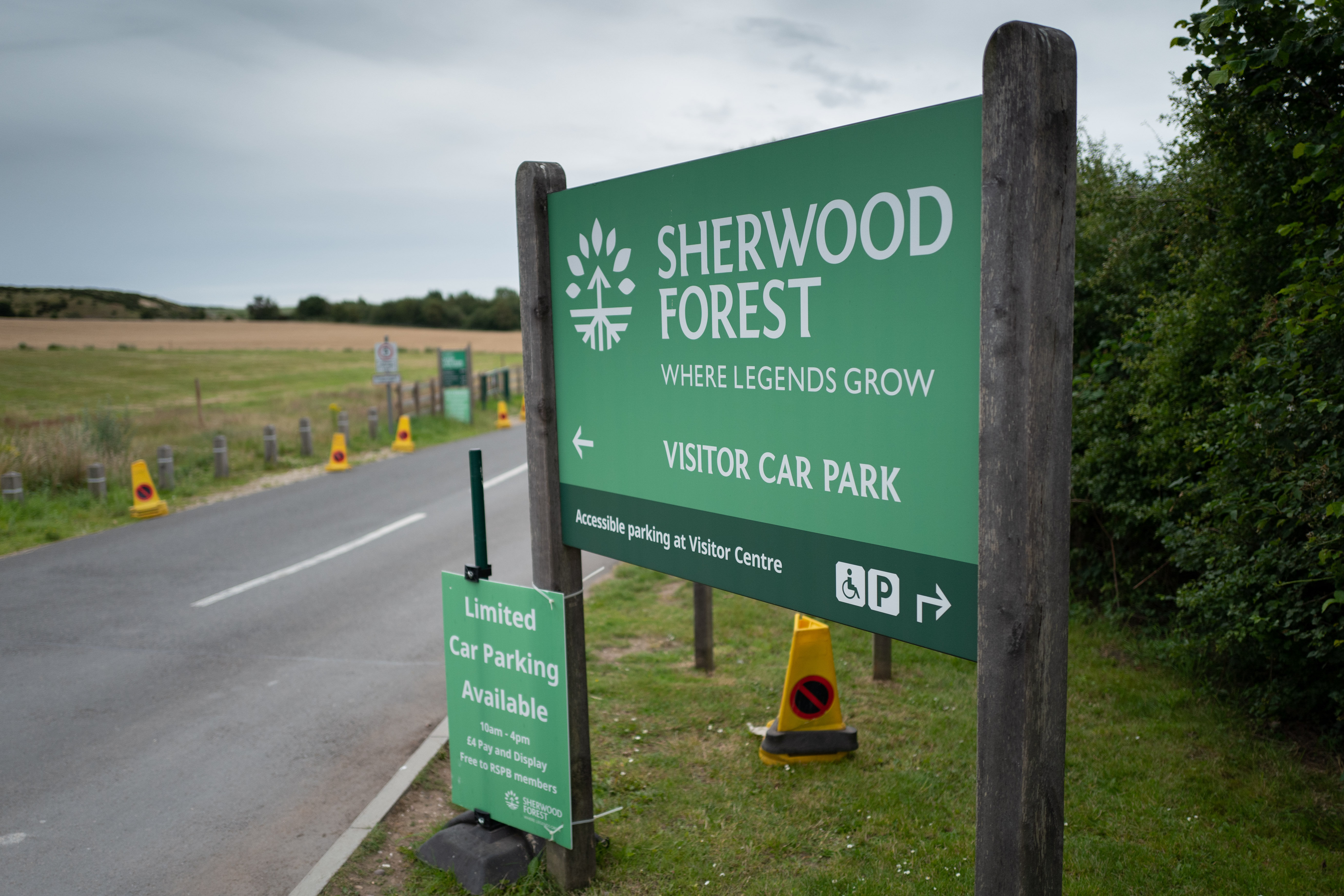 The tree in Sherwood Forest is famed for its connection with Robin Hood (Picture: SWNS)