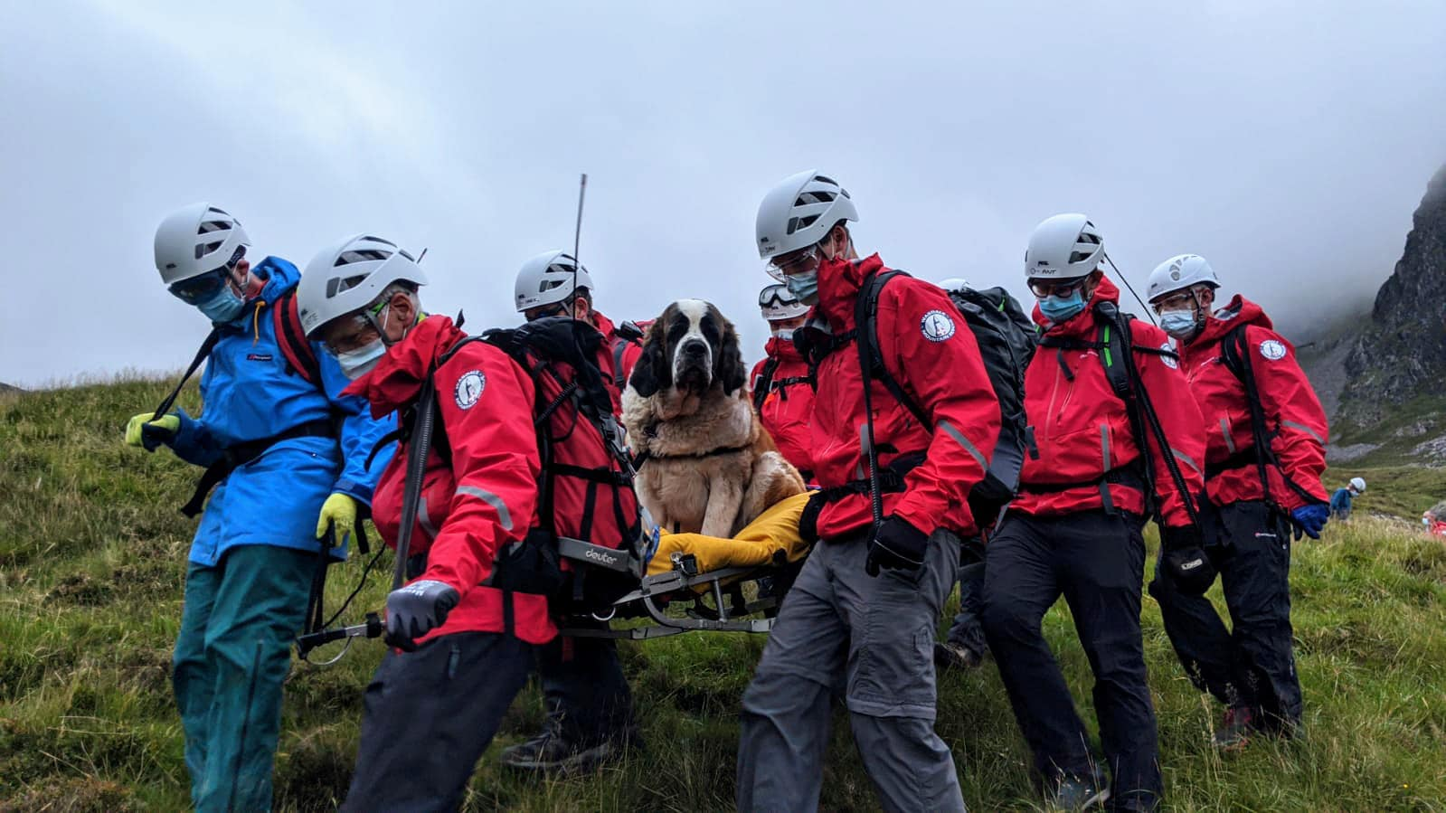 Wasdale Mountain Rescue Team spoke to vets before embarking on their mission to figure out how to best approach the rescue.  Source: Facebook/Wasdale Mountain Rescue Team
