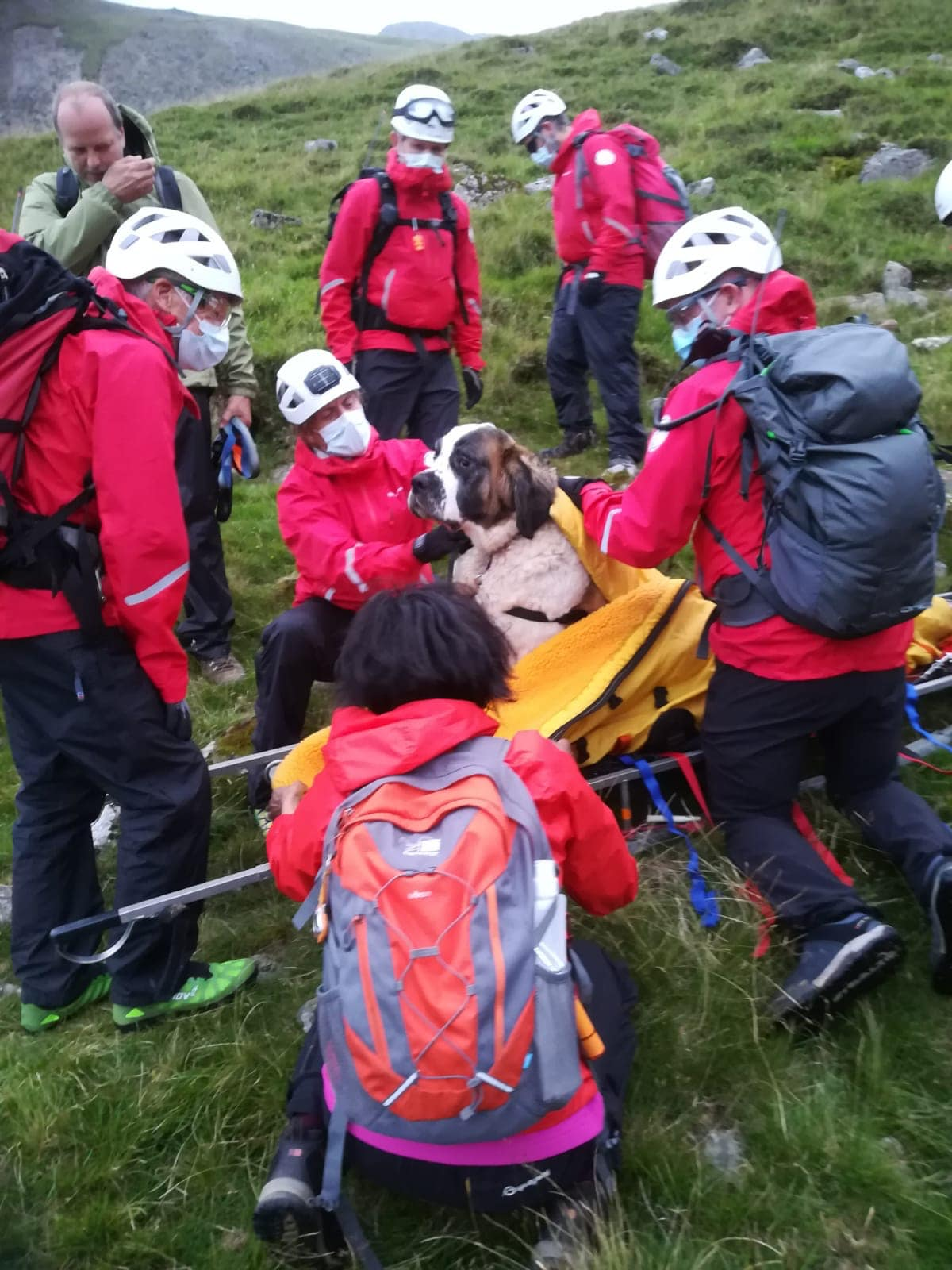 """The team gave  Daisy some treats so they could asses her and get her on to the stretcher, making sure they didn't cause any distress. Source"""" Facebook/Wasdale Mountain Rescue Team"""