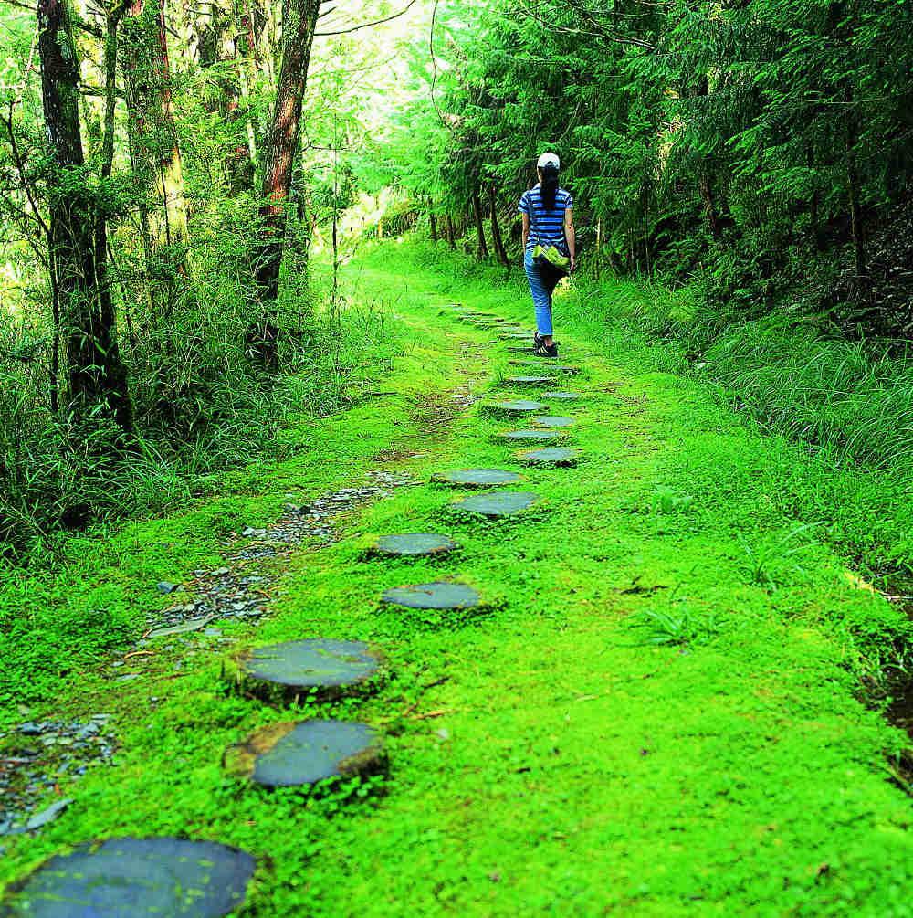 台灣山毛櫸步道(圖片來源:羅東林區管理處)