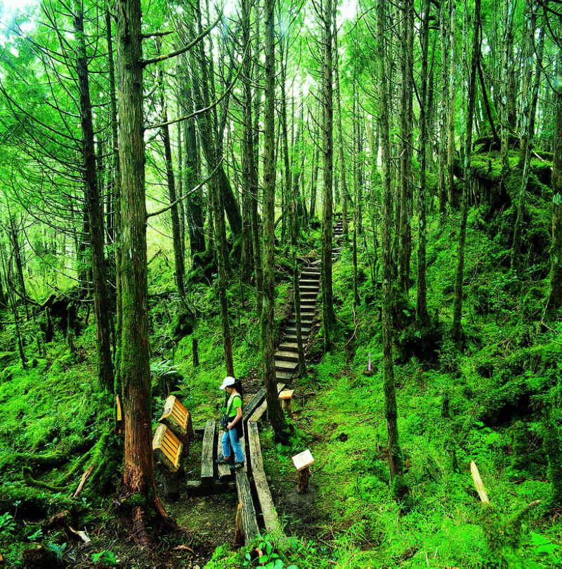 翠峰湖環山步道 (圖片來源:羅東林區管理處)
