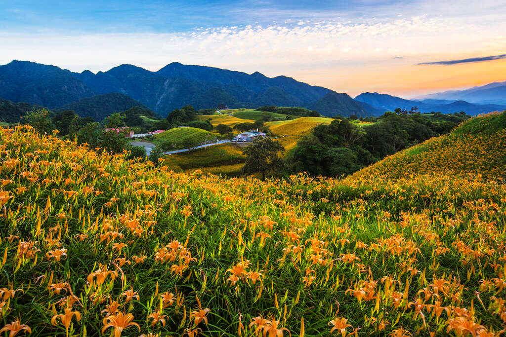 黃昏的六十石山別有一番風情(圖片來源:花東縱谷國家風景區)