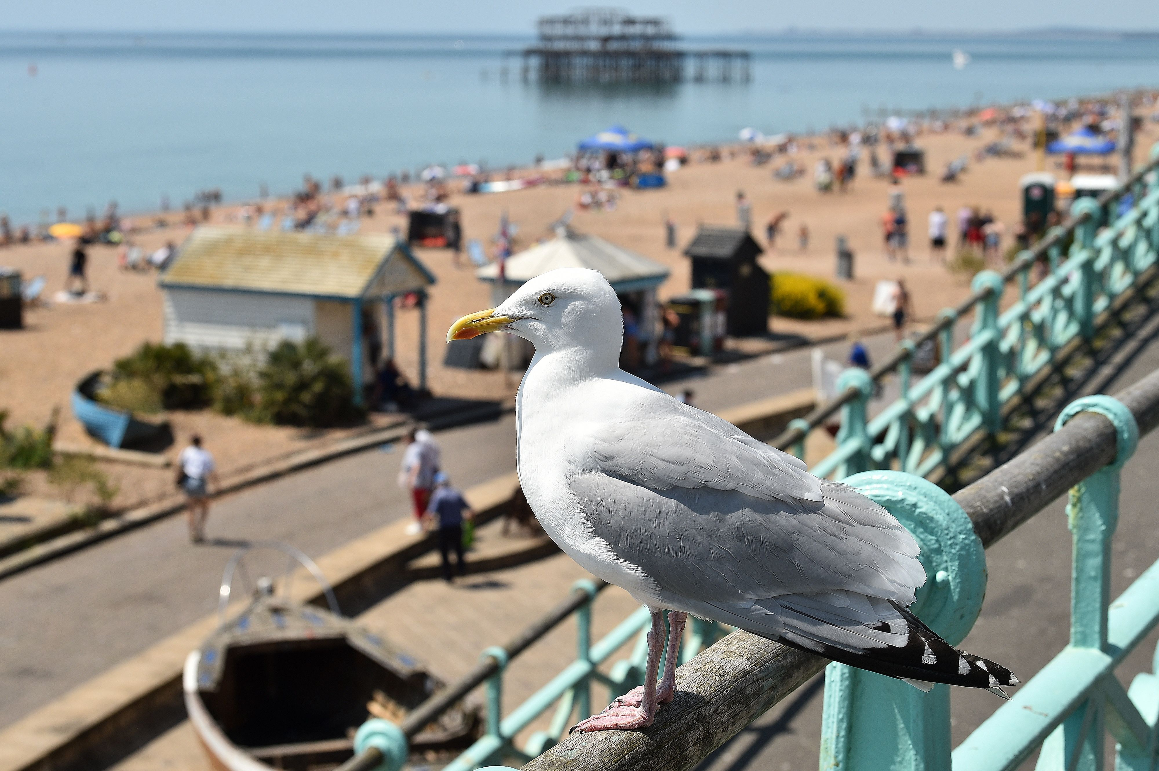 A man bit a seagull before throwing it to the ground, according to police and then accused the bird of attacking him. Source: Getty Images