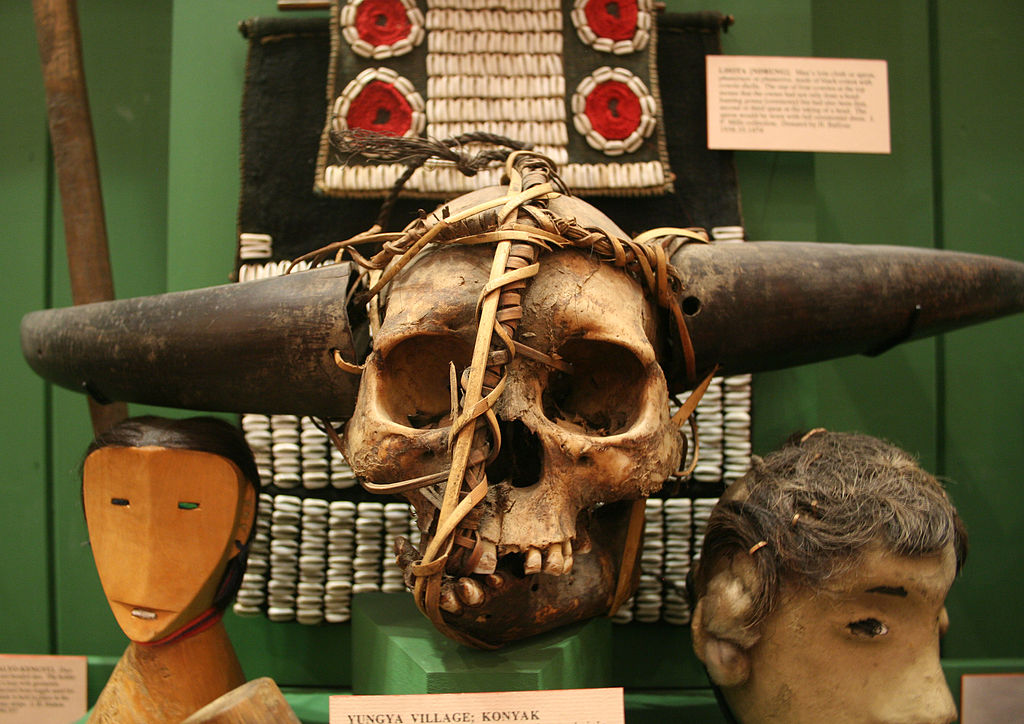 皮特・里弗斯博物館的印度永吉村骷顱頭 (Photo by Einsamer Schütze, License: CC BY-SA 3.0, Wikimedia Commons提供)
