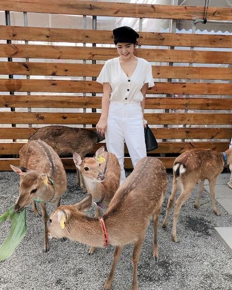除了有可愛的小鹿之外,張美阿嬤農場還有很多DIY活動讓人耗一個下午也不是問題!