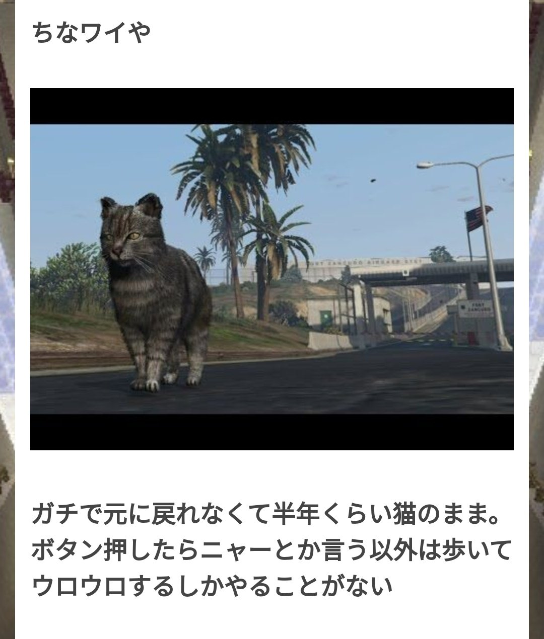 用貓玩半年,佩服...(圖源:Twitter)