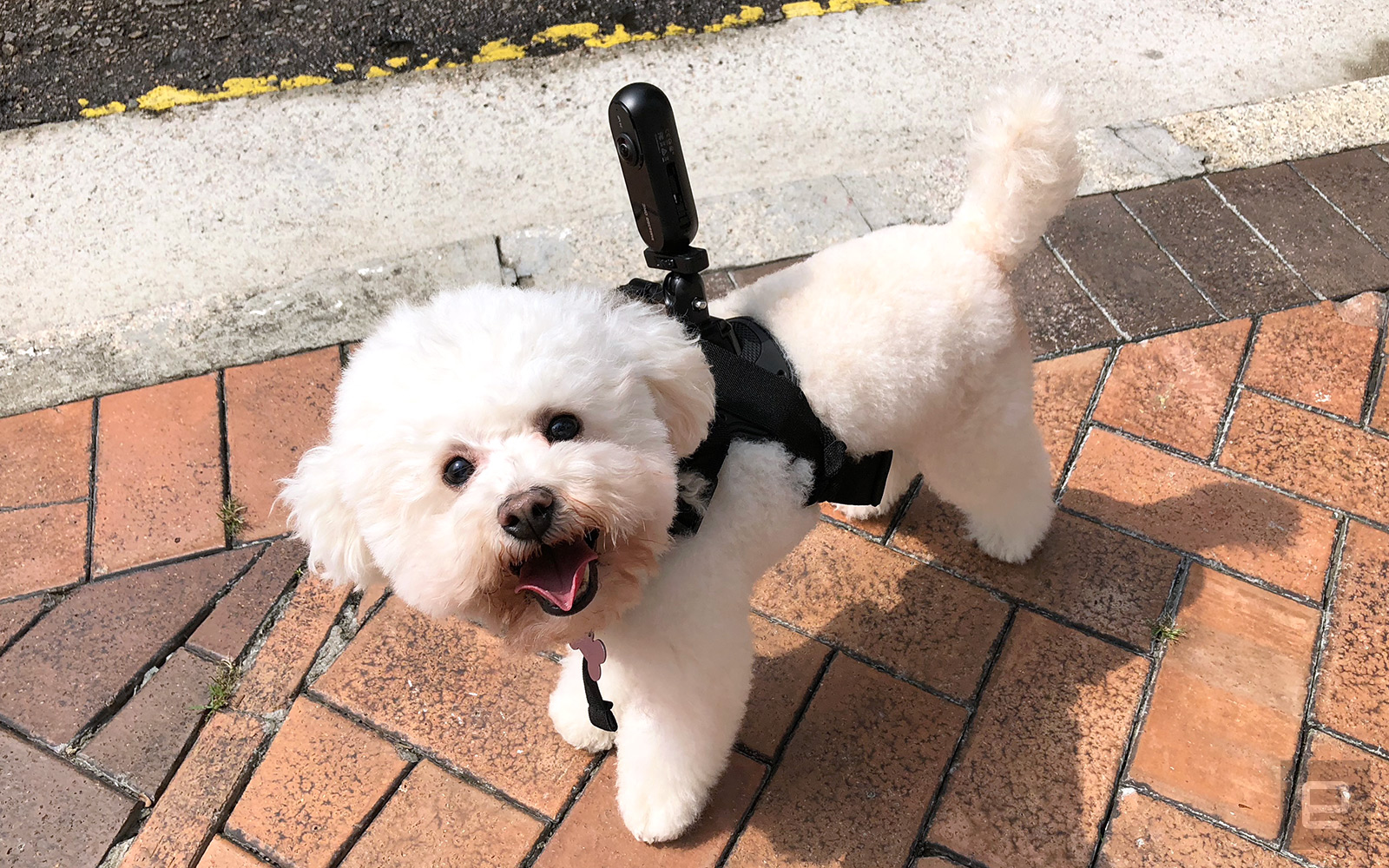 Insta360 One with a dog vest mount.