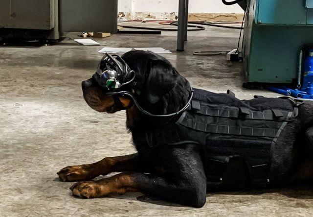 Dog AR goggles