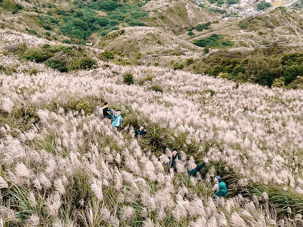 秋芒仙氣飄 台北近郊6條芒花紛飛步道走起來