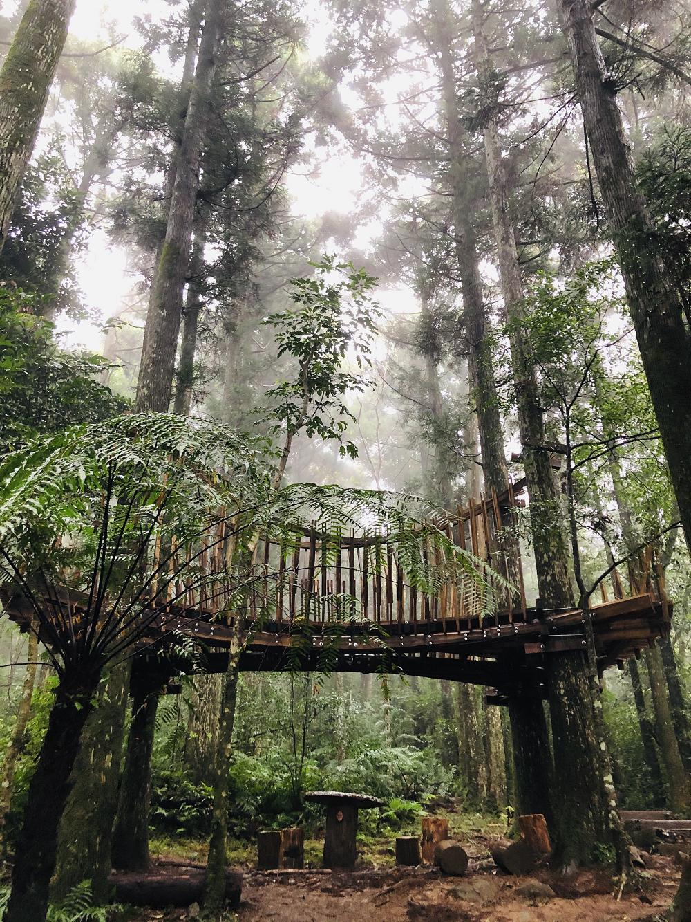 木造景觀(圖片來源:行政院農業委員會林務局)